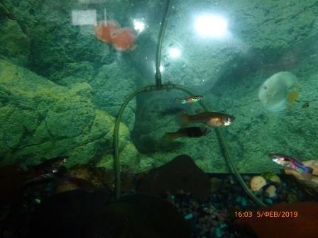 Новыя жыхары акварыума